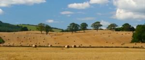 KLF Insurance Brokers Limited Harvest Fields