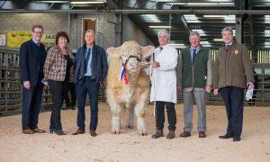 British Charolais Cattle Society